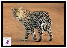 Animal Image2