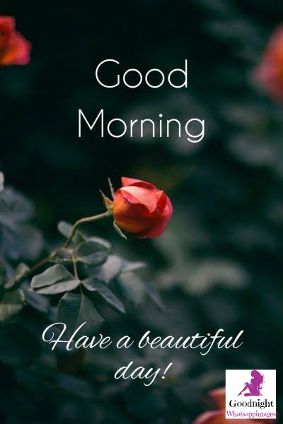 # 8+Good Morning Beautiful Flower Images