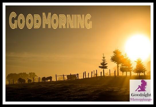 goodmorning51