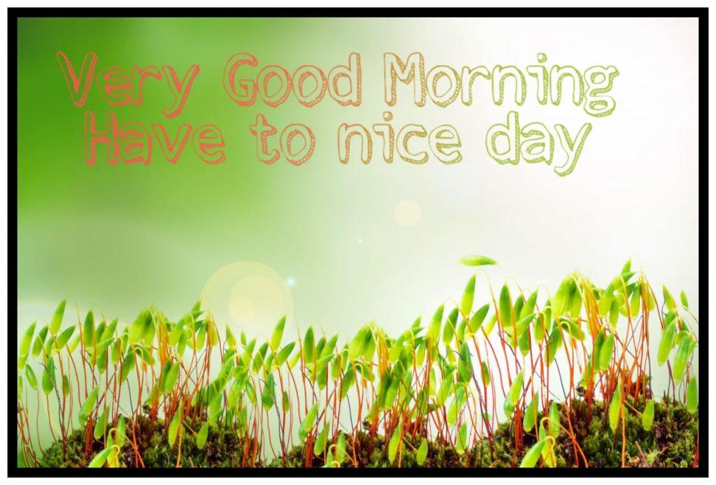 goodmorning81
