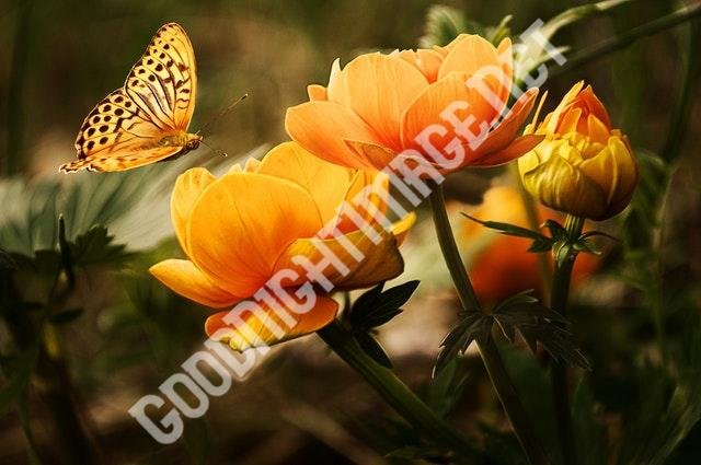 orange flower with butterfly 87452