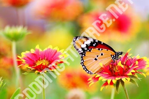 # 8+Amazing Pictures of Nature Free Download