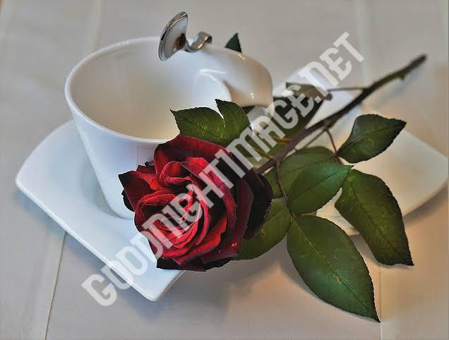 Beautiful Coffee Cup Images with rose6