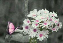 Beautiful Image for DP 36