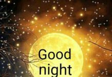 Lovely Good Night Images1