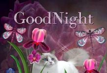 Lovely Good Night Images10